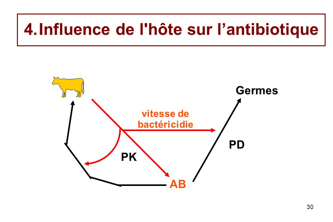 Influence de l hôte sur l'antibiotique