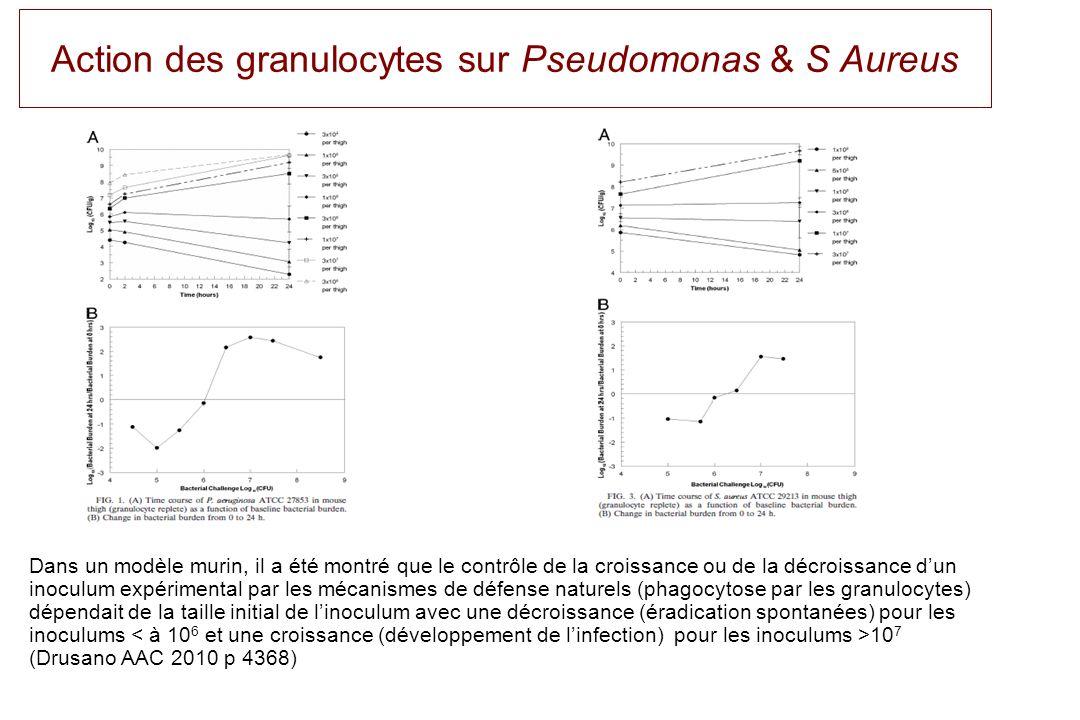 Action des granulocytes sur Pseudomonas & S Aureus