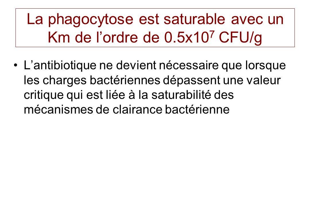 La phagocytose est saturable avec un Km de l'ordre de 0.5x107 CFU/g