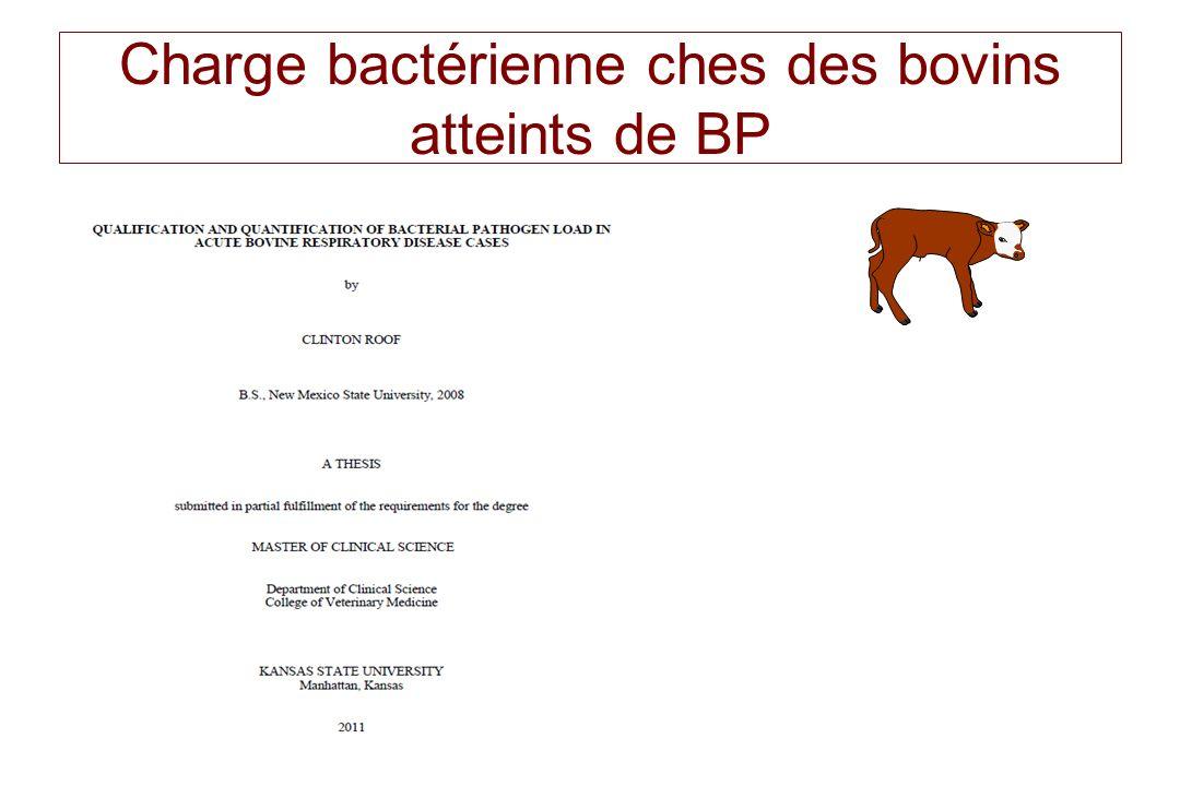 Charge bactérienne ches des bovins atteints de BP