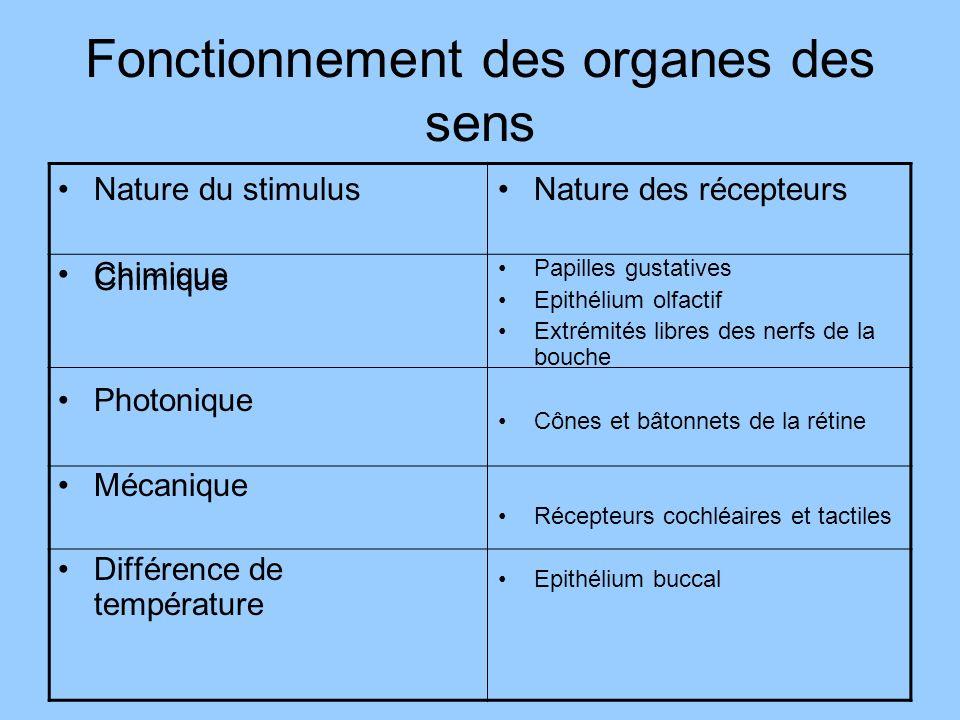 Fonctionnement des organes des sens
