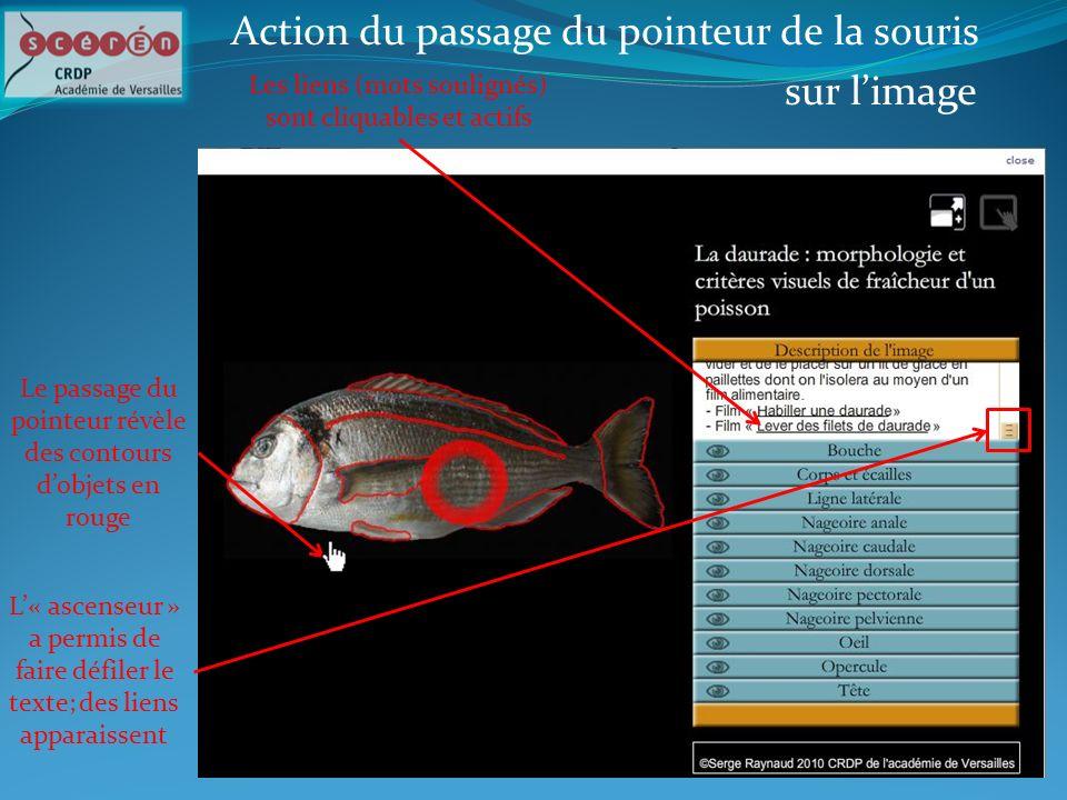 Action du passage du pointeur de la souris sur l'image