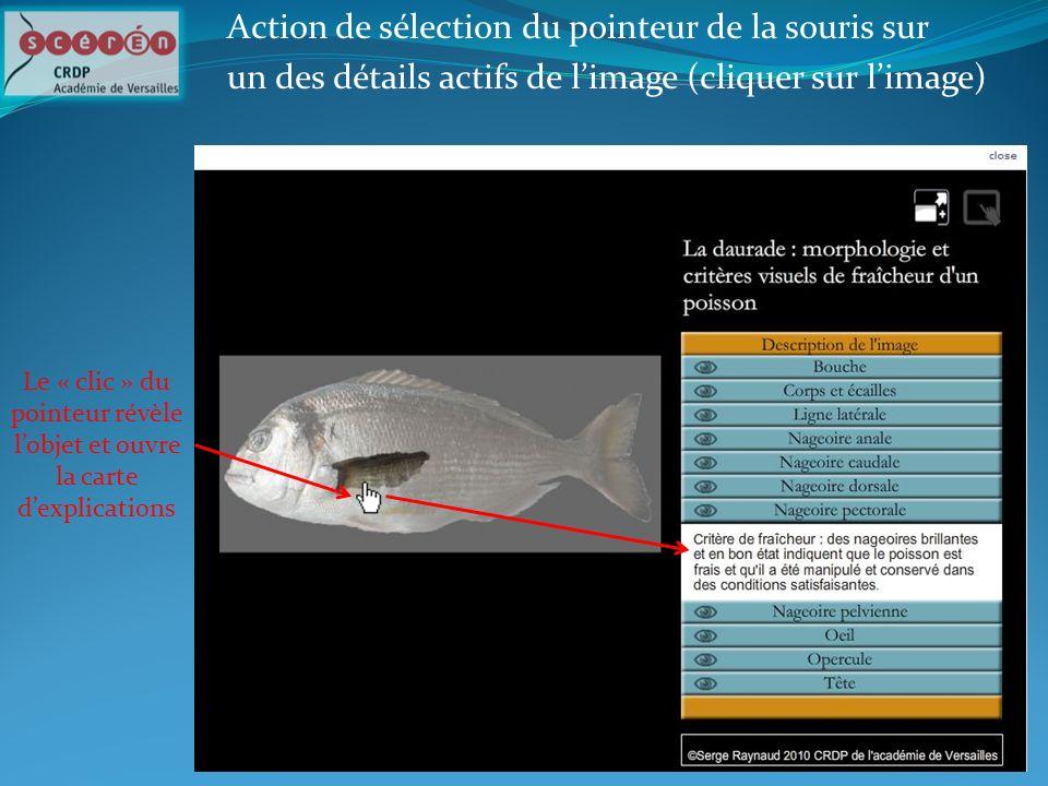 Action de sélection du pointeur de la souris sur