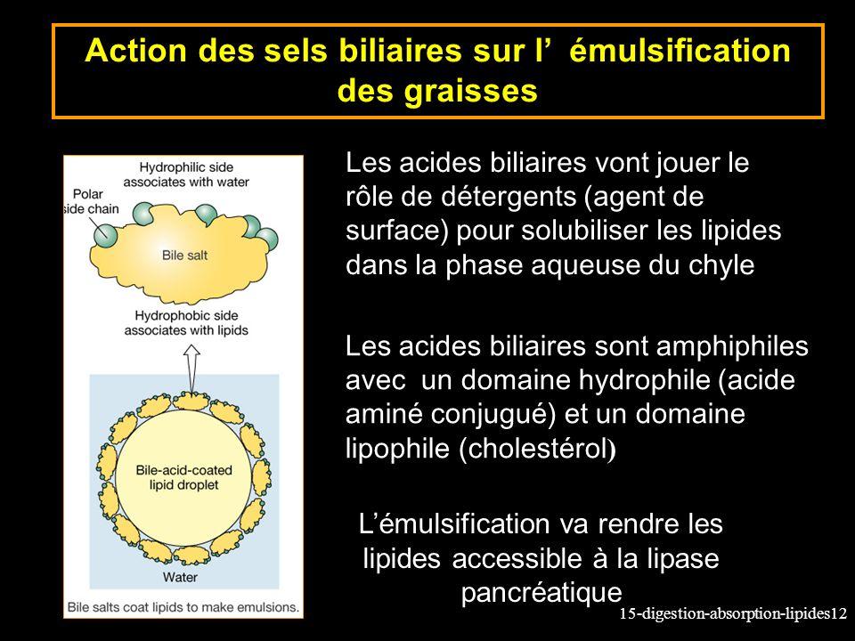 Action des sels biliaires sur l' émulsification des graisses