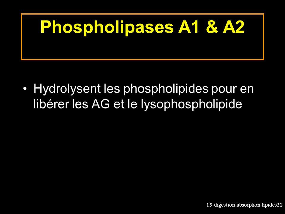Phospholipases A1 & A2 Hydrolysent les phospholipides pour en libérer les AG et le lysophospholipide.
