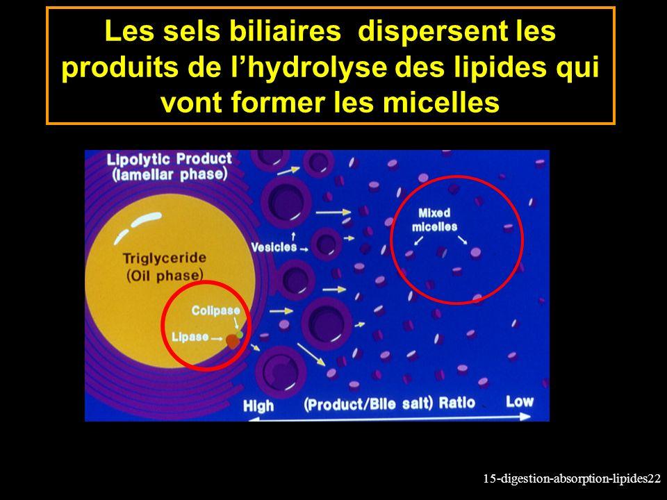 Les sels biliaires dispersent les produits de l'hydrolyse des lipides qui vont former les micelles