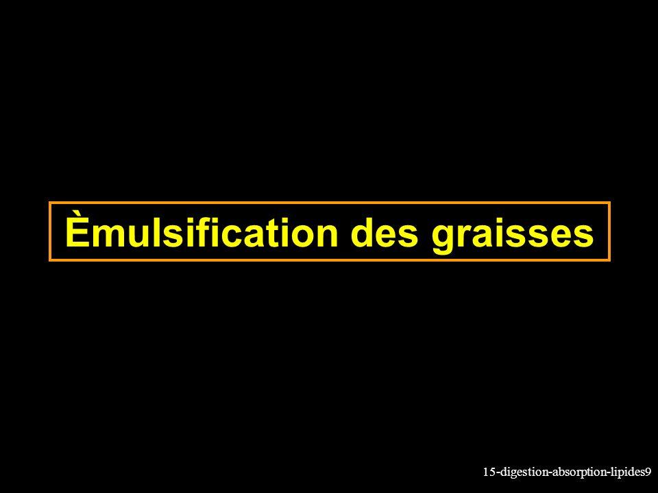 Èmulsification des graisses