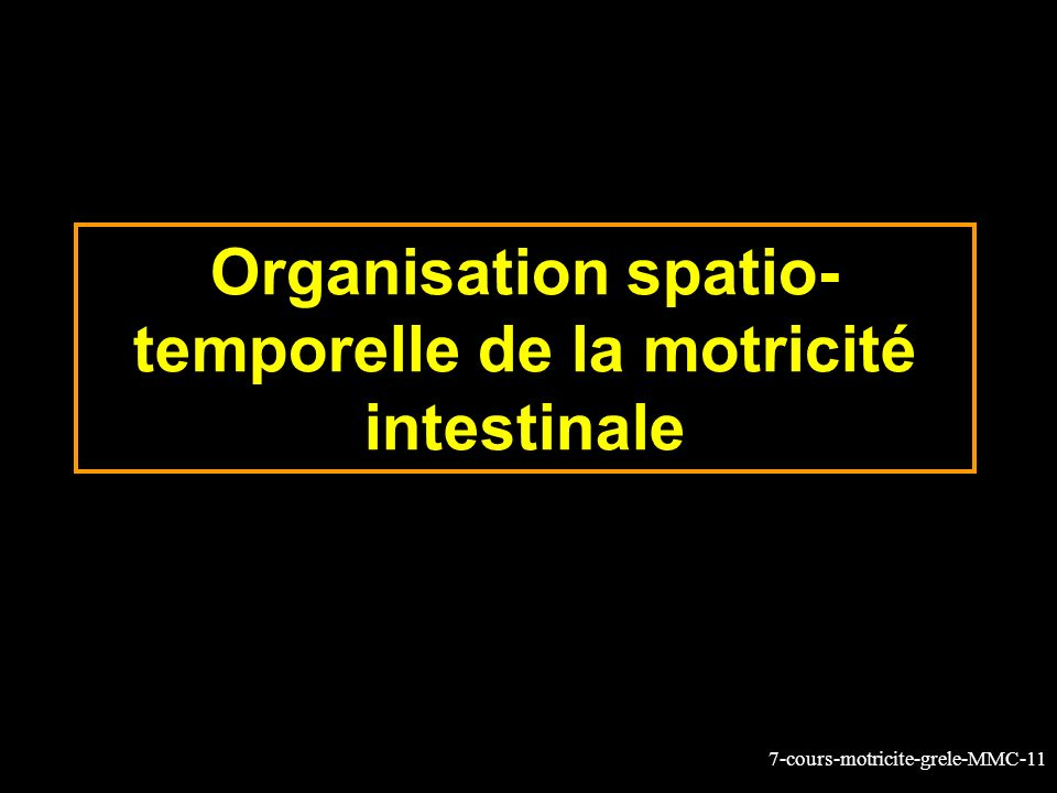 Organisation spatio-temporelle de la motricité intestinale
