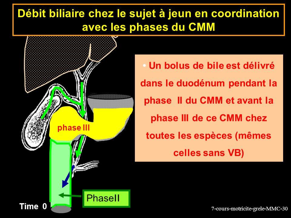 Débit biliaire chez le sujet à jeun en coordination avec les phases du CMM