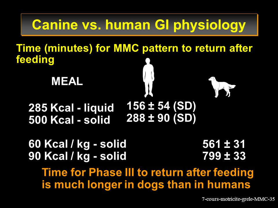 Canine vs. human GI physiology