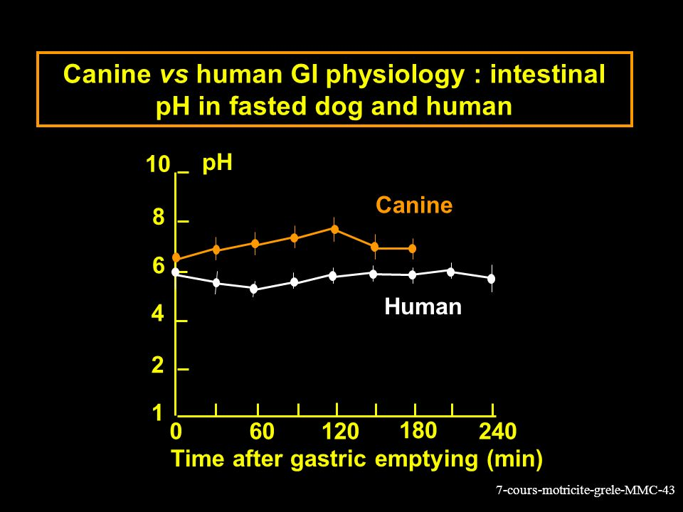 Canine vs human GI physiology : intestinal pH in fasted dog and human