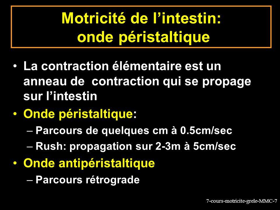 Motricité de l'intestin: onde péristaltique