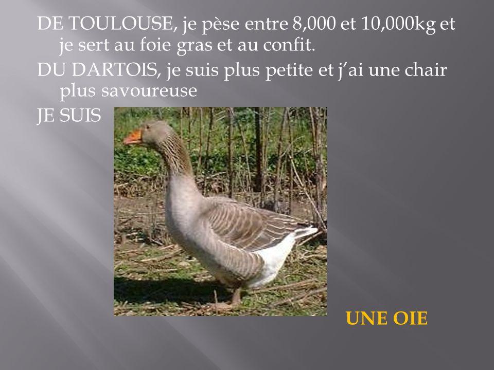 DE TOULOUSE, je pèse entre 8,000 et 10,000kg et je sert au foie gras et au confit.
