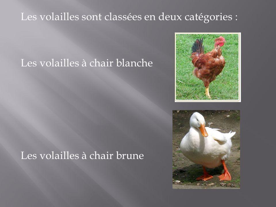 Les volailles sont classées en deux catégories : Les volailles à chair blanche Les volailles à chair brune
