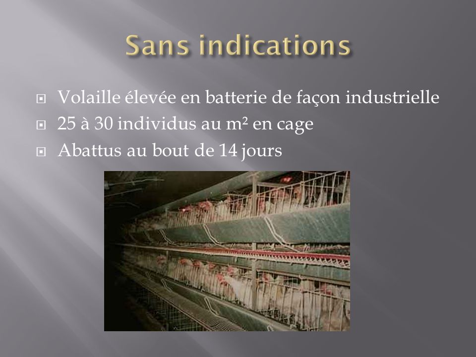 Sans indications Volaille élevée en batterie de façon industrielle