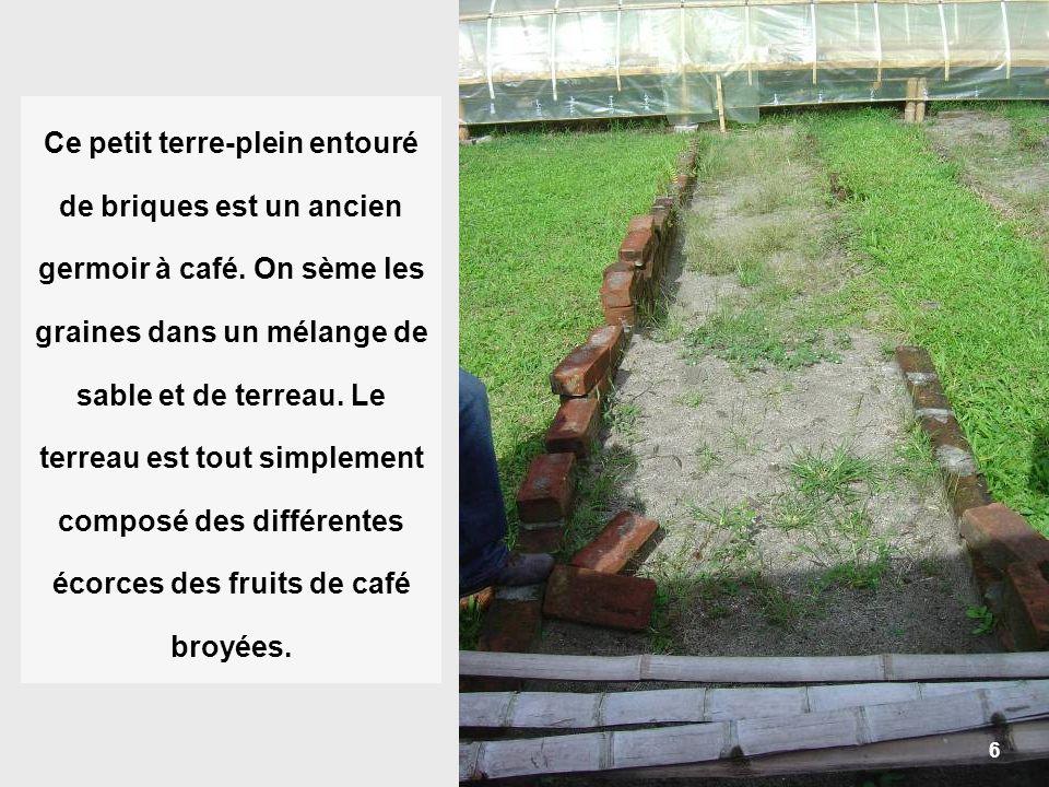 Ce petit terre-plein entouré de briques est un ancien germoir à café
