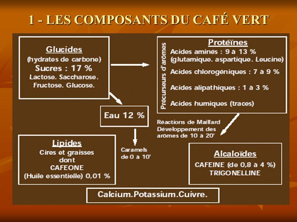 1 - LES COMPOSANTS DU CAFÉ VERT