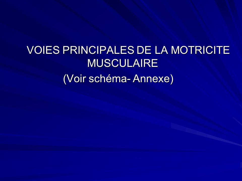 VOIES PRINCIPALES DE LA MOTRICITE MUSCULAIRE