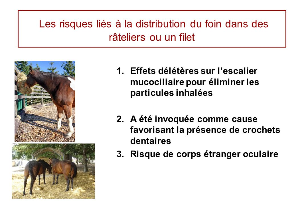 Les risques liés à la distribution du foin dans des râteliers ou un filet