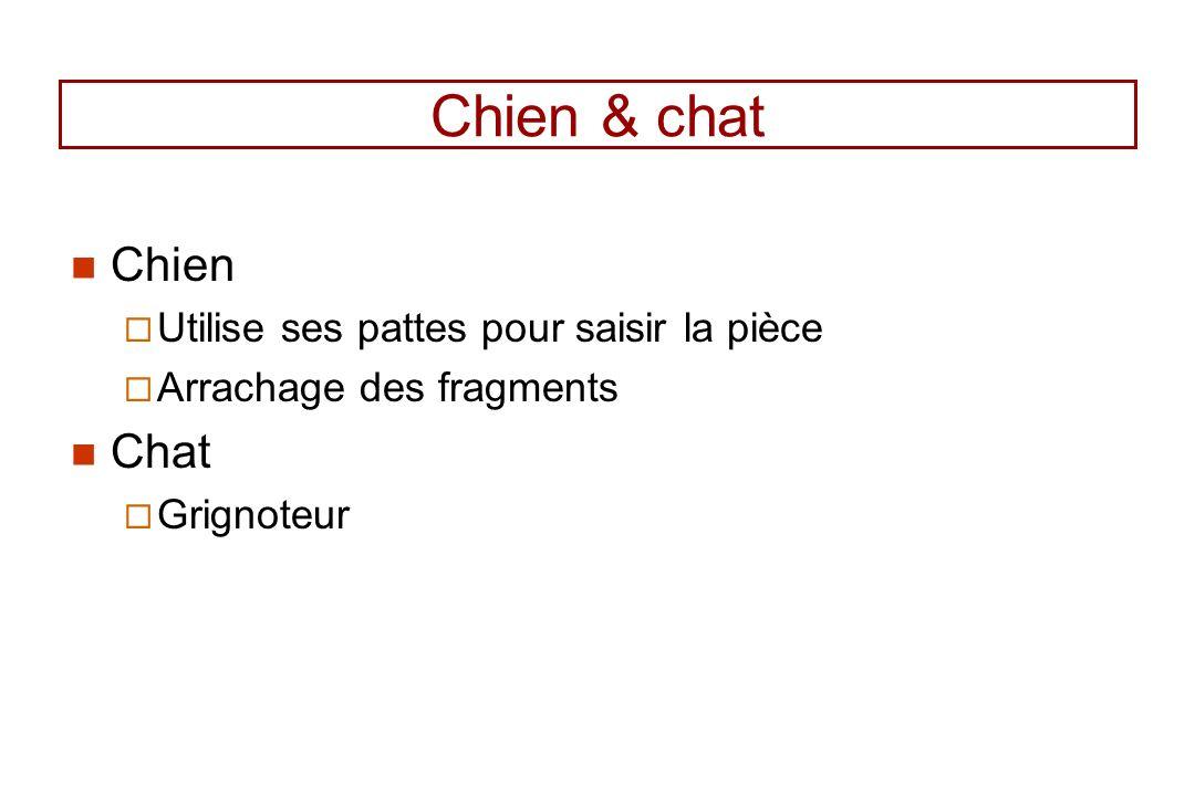 Chien & chat Chien Chat Utilise ses pattes pour saisir la pièce