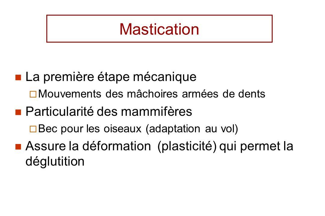 Mastication La première étape mécanique Particularité des mammifères