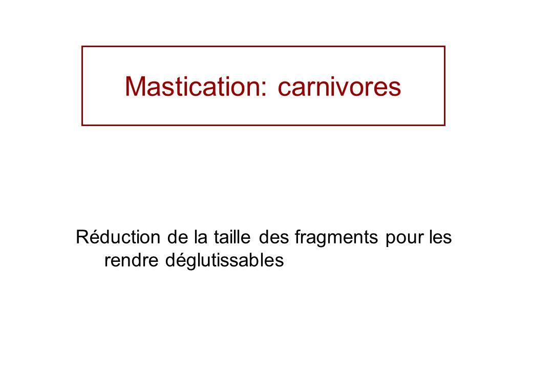 Mastication: carnivores