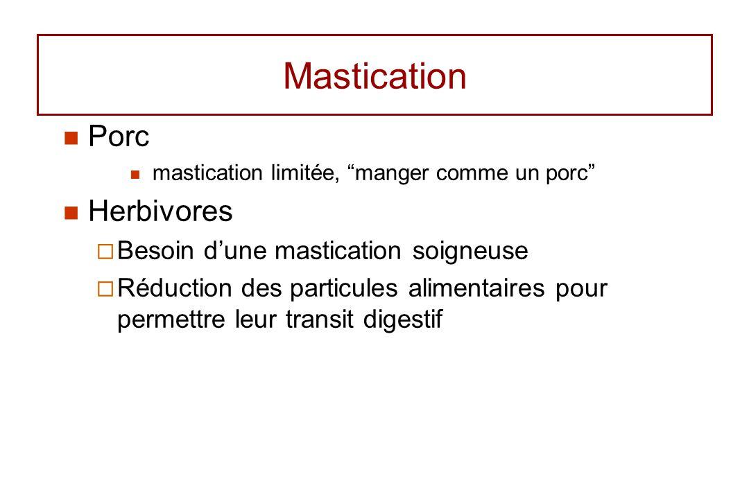 Mastication Porc Herbivores Besoin d'une mastication soigneuse