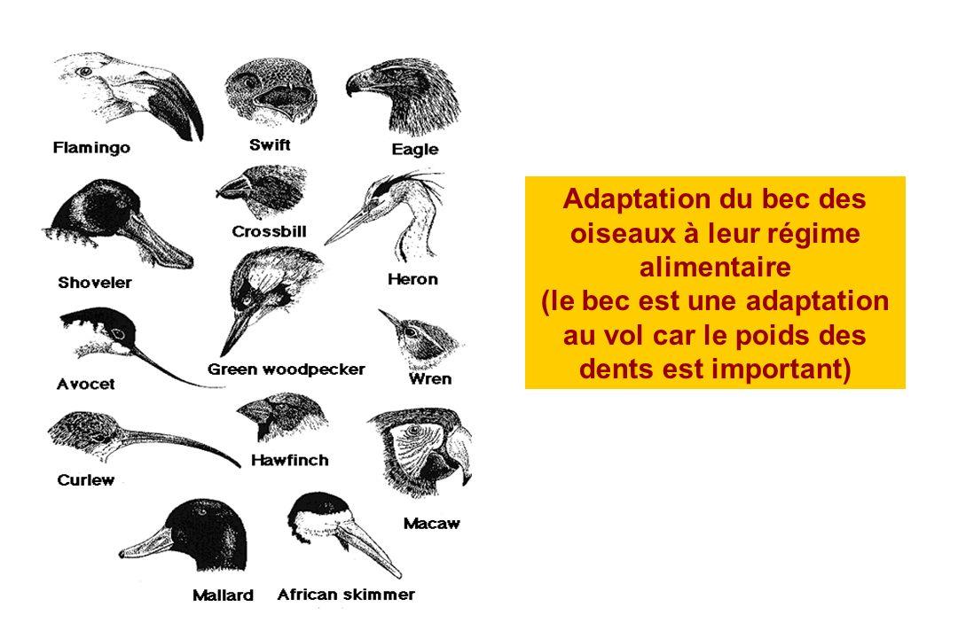 Adaptation du bec des oiseaux à leur régime alimentaire