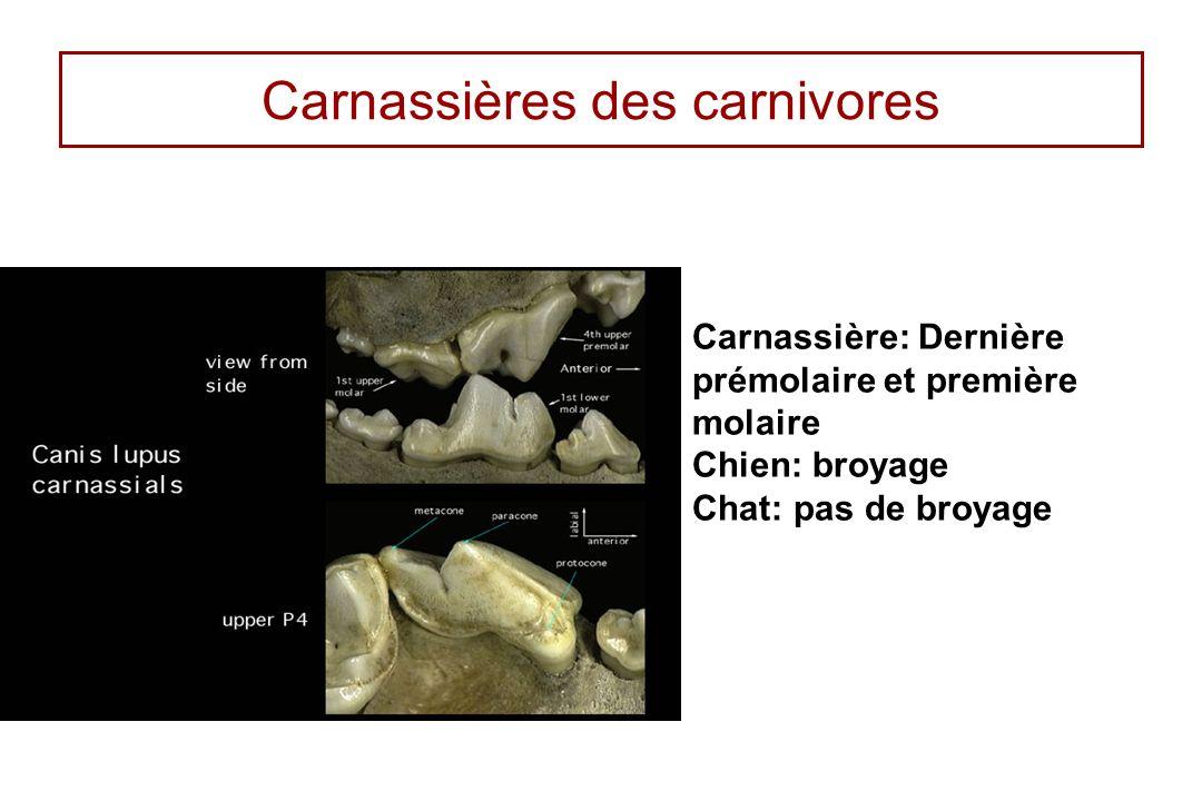 Carnassières des carnivores
