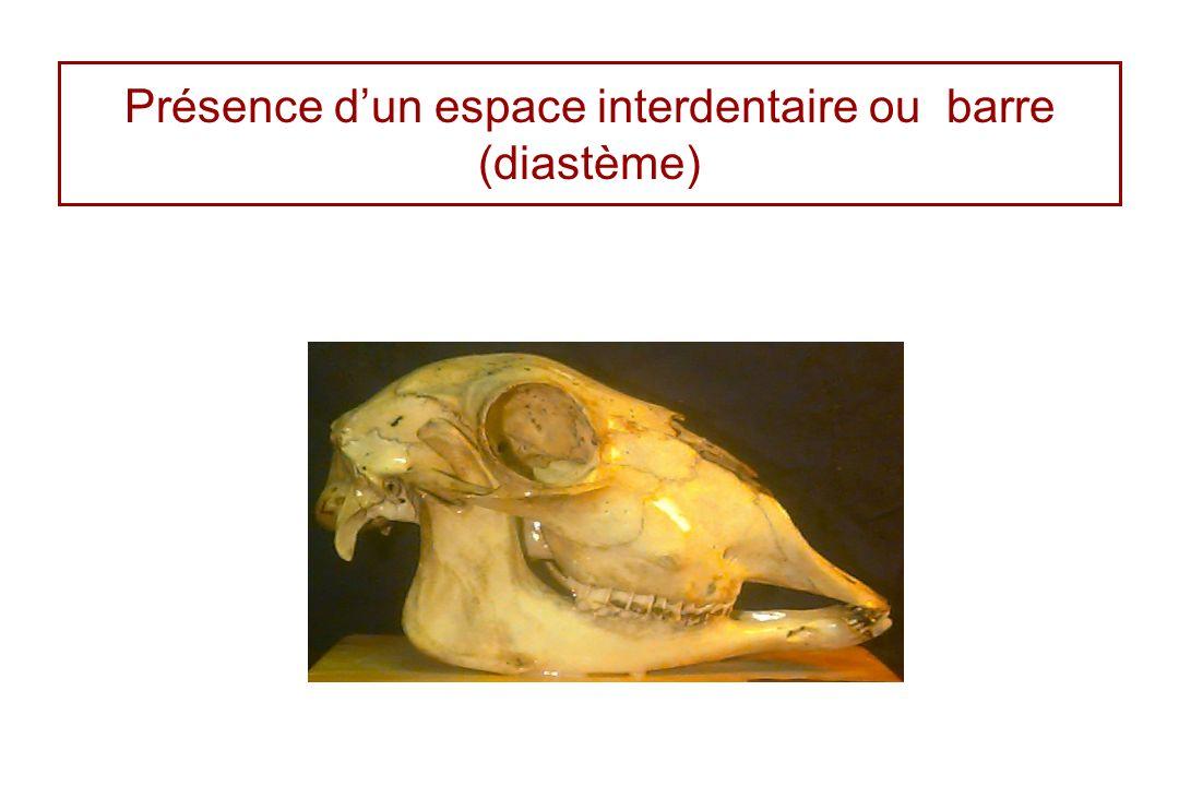 Présence d'un espace interdentaire ou barre (diastème)