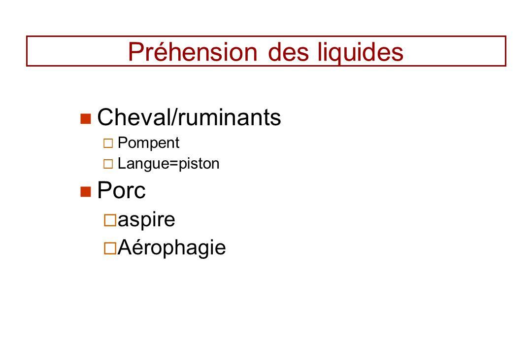 Préhension des liquides