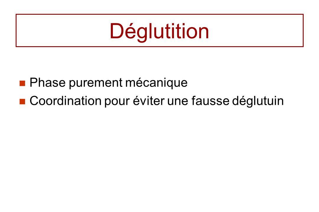 Déglutition Phase purement mécanique