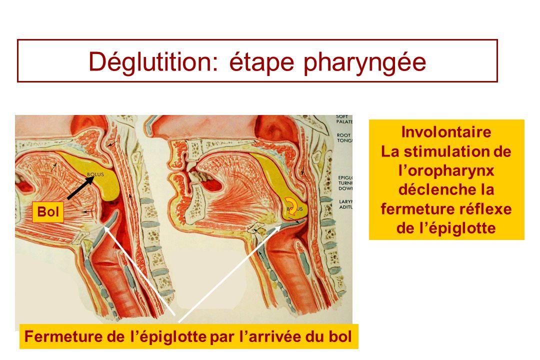 Déglutition: étape pharyngée