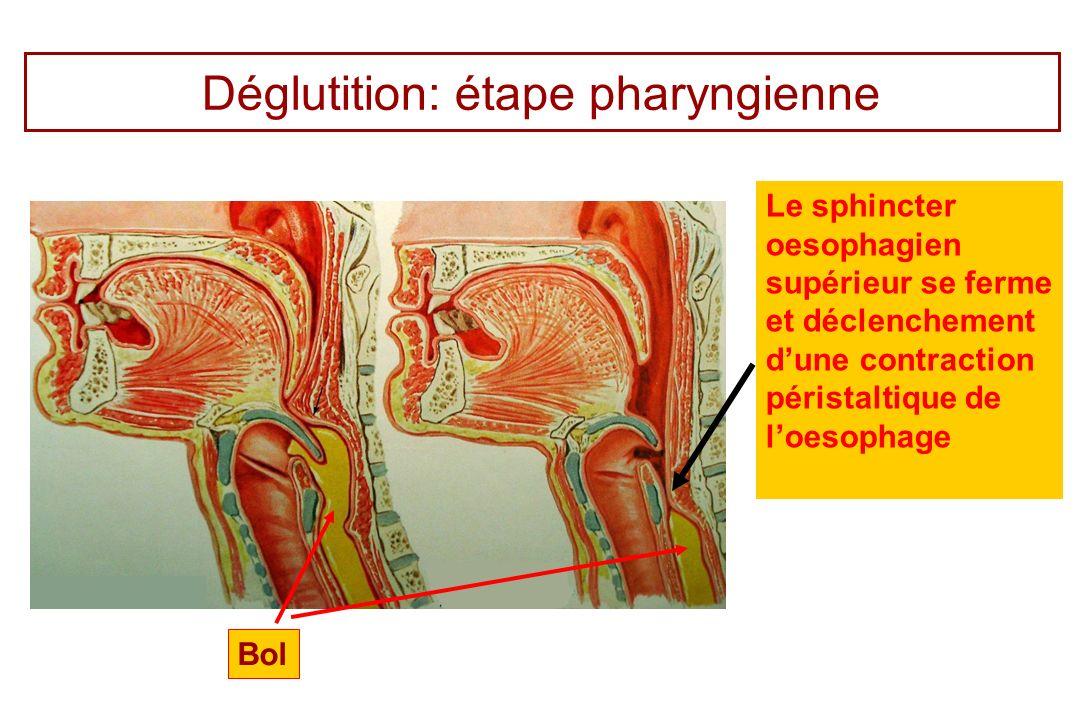 Déglutition: étape pharyngienne