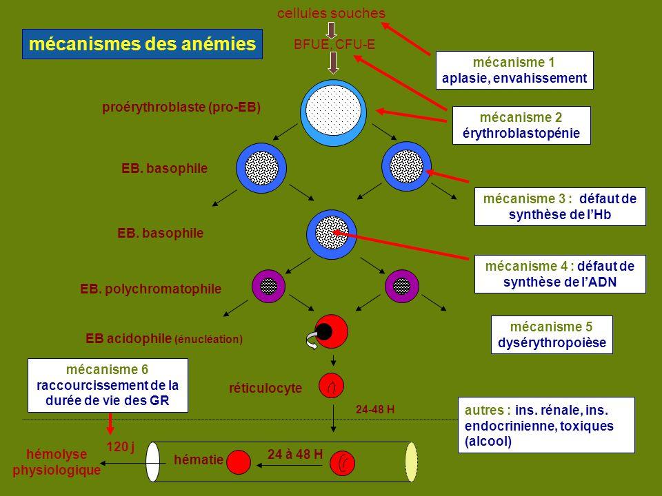 mécanismes des anémies