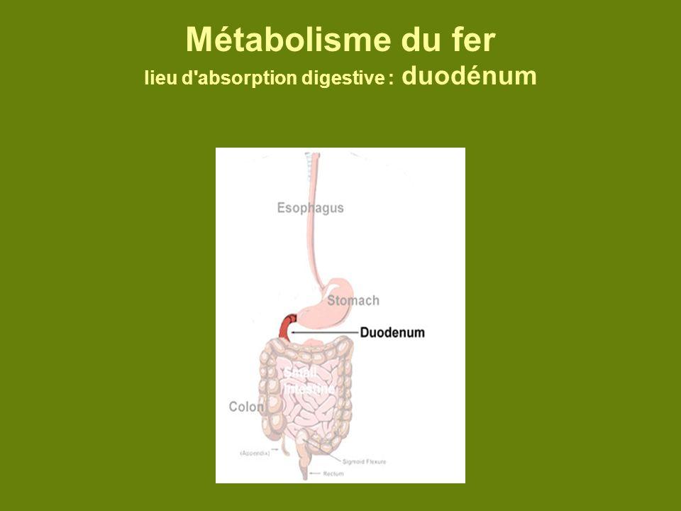 Métabolisme du fer lieu d absorption digestive : duodénum