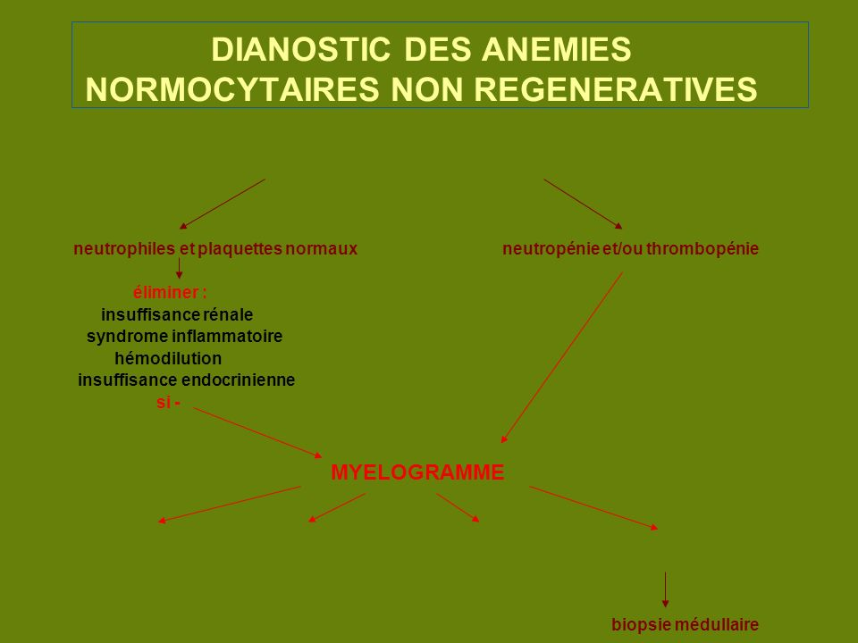 DIANOSTIC DES ANEMIES NORMOCYTAIRES NON REGENERATIVES
