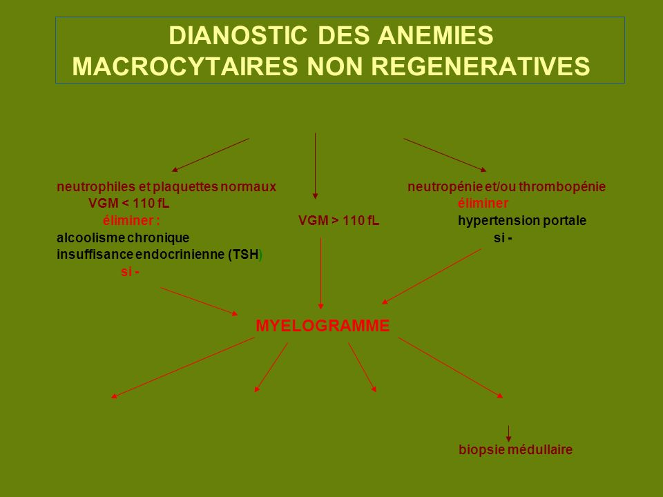 DIANOSTIC DES ANEMIES MACROCYTAIRES NON REGENERATIVES