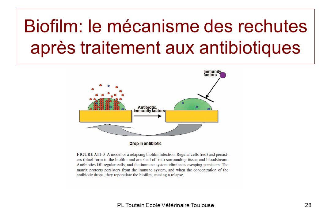 Biofilm: le mécanisme des rechutes après traitement aux antibiotiques