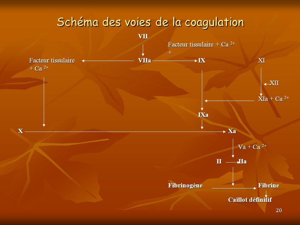 Schéma des voies de la coagulation