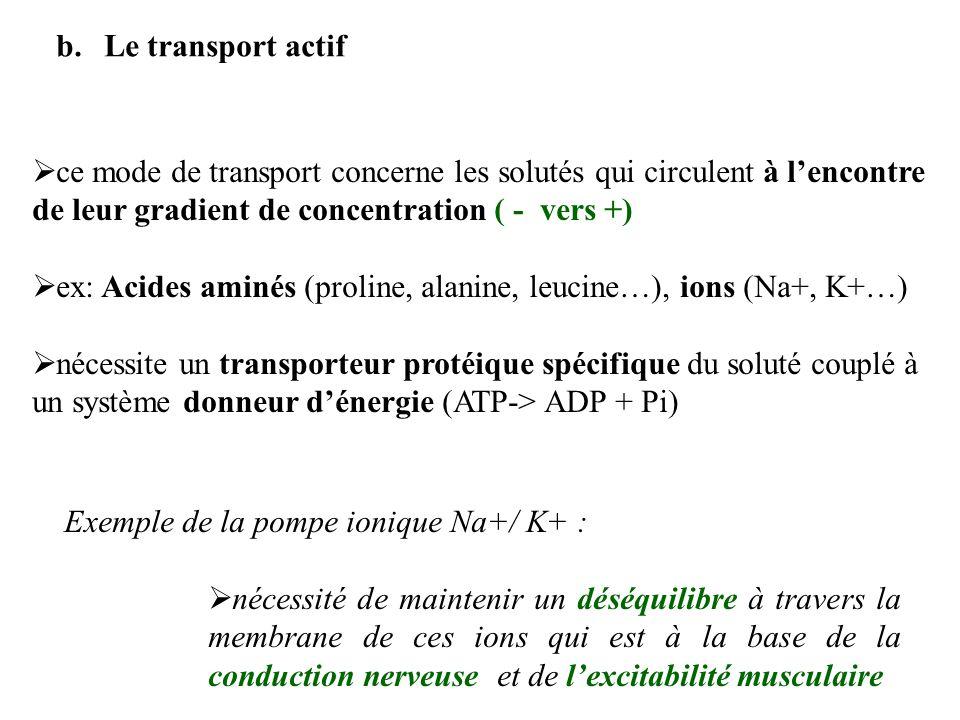 Le transport actif ce mode de transport concerne les solutés qui circulent à l'encontre de leur gradient de concentration ( - vers +)