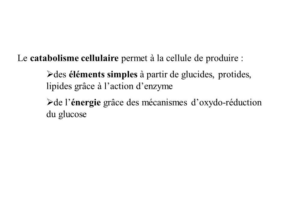 Le catabolisme cellulaire permet à la cellule de produire :