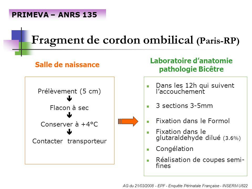 Fragment de cordon ombilical (Paris-RP)