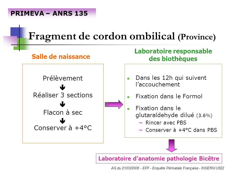 Fragment de cordon ombilical (Province)