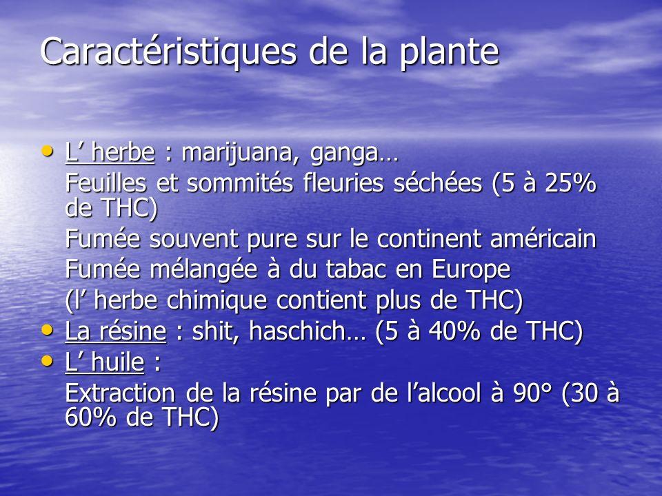 Caractéristiques de la plante