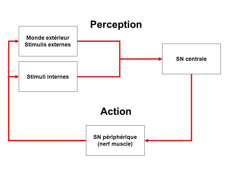 Perception Action Monde extérieur Stimulis externes SN centrale