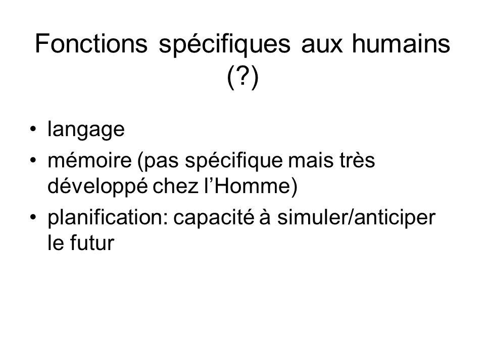 Fonctions spécifiques aux humains ( )