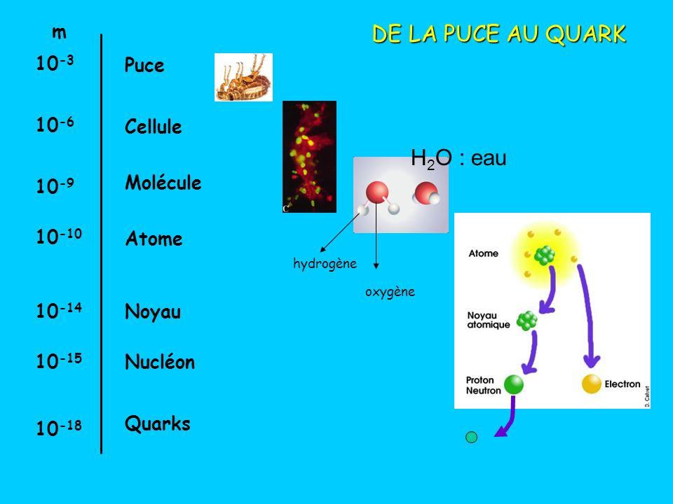DE LA PUCE AU QUARK H2O : eau m 10-3 Puce 10-6 Cellule Molécule 10-9