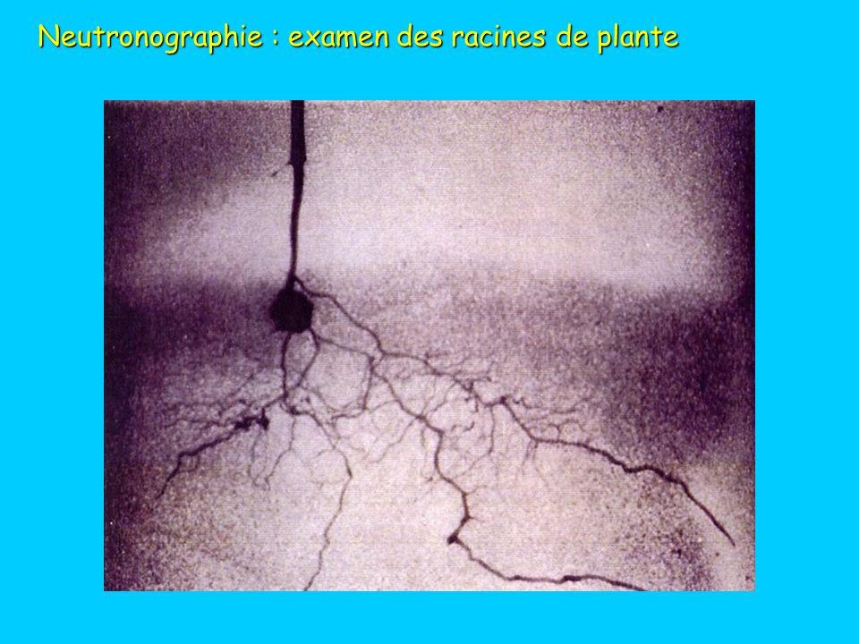 Neutronographie : examen des racines de plante