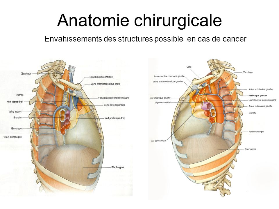 Anatomie chirurgicale